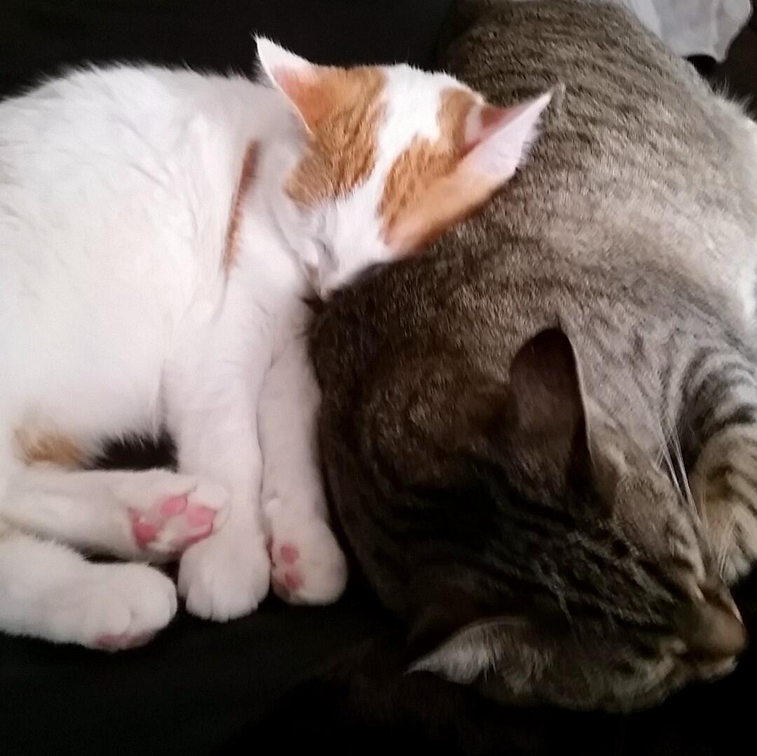 Olivia and Jaeger